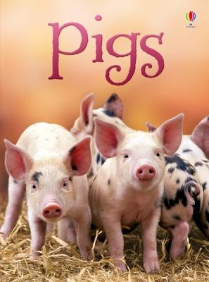 Pigs by James Maclaine