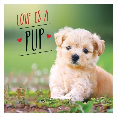 Love is a Pup: A Dog-Tastic Celebration of the World's Cutest Puppies by Charlie Ellis