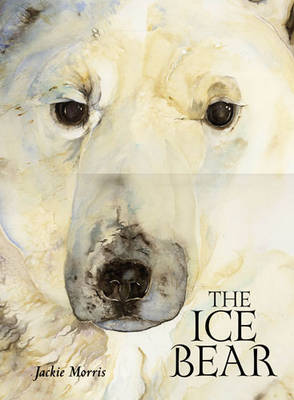 Ice Bear Signed Edition by Jackie Morris