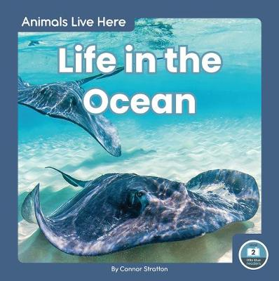 Animals Live Here: Life in the Ocean by Connor Stratton