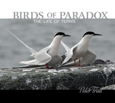 Birds of Paradox: The Life of Terns by Peter Trull