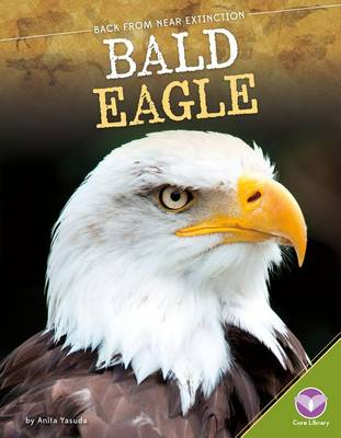 Bald Eagle by Anita Yasuda