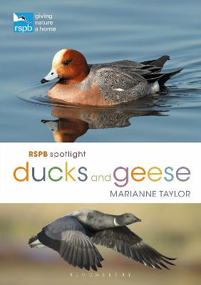 RSPB Spotlight Ducks and Geese by Marianne Taylor