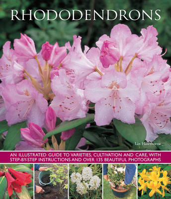 Rhododendrons by Lin Hawthorne