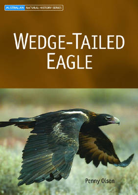 Wedge-tailed Eagle by Penny Olsen