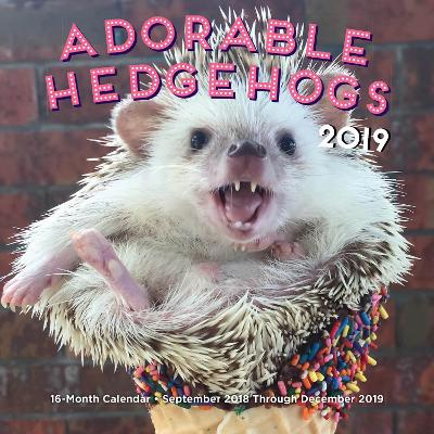 Adorable Hedgehogs Mini 2019: 16-Month Calendar - September 2018 through December 2019 by Editors of Rock Point