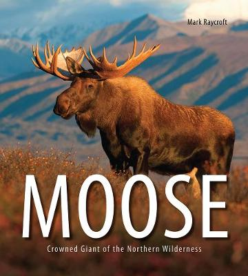Moose by Mark Raycroft