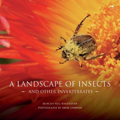 A Landscape of Insects by Duncan MacFadyen
