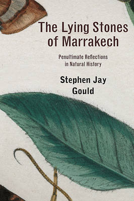 Lying Stones of Marrakech by Stephen Jay Gould