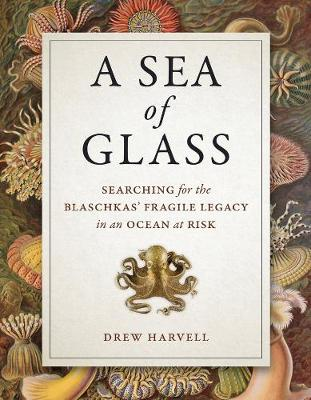 Sea of Glass book