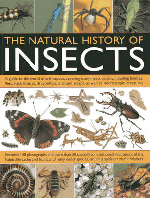 Natural History Of Insects by Martin Walters