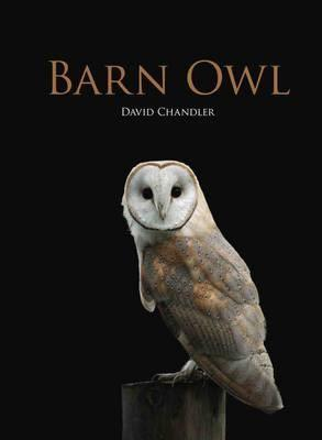 Barn Owl by David Chandler