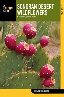 Sonoran Desert Wildflowers by Richard Spellenberg