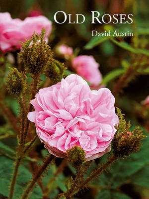 Old Roses by David Austin