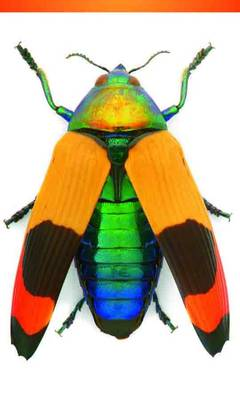 Jewel Beetle 3 X 5 Notepad by Christopher Marley
