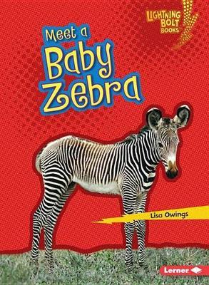 Meet a Baby Zebra by Lisa Owings