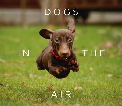 Dogs in the Air by Jack Bradley