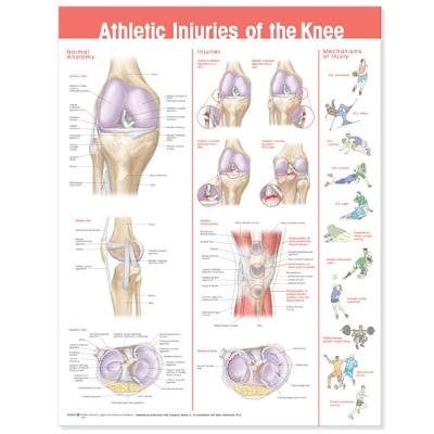 Athletic Injuries of the Knee Anatomical Chart by Anatomical Chart Company