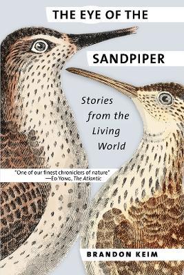 The Eye of the Sandpiper by Brandon Keim