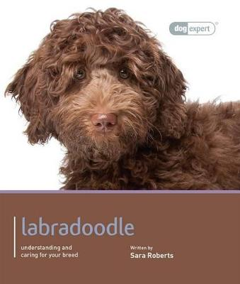 Labradoodle - Dog Expert by Sarah Rogers