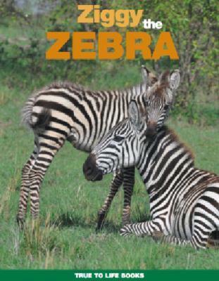Adventures with Ziggy  the Zebra book