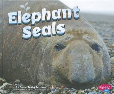 Elephant Seals by Megan C Peterson