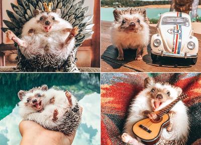 Herbee the Hedgehog Jigsaw book