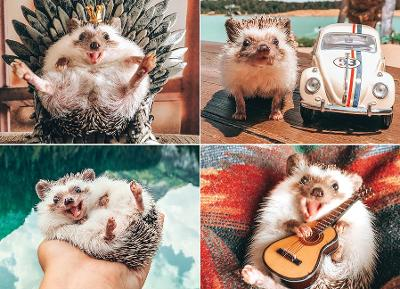 Herbee the Hedgehog Jigsaw by Willow Creek Press