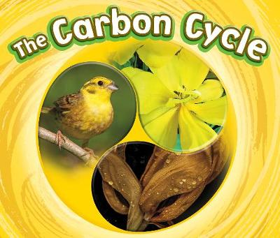 The Carbon Cycle by Catherine Ipcizade