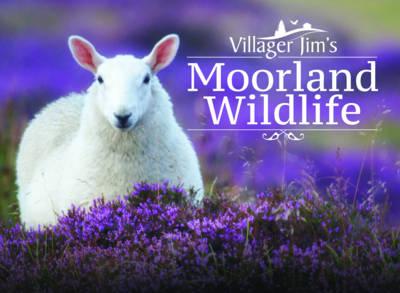 Villager Jim's Moorland Wildlife by Villager Jim