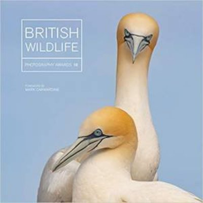 British Wildlife Photography Awards 10 by Maggie Gowan