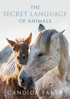 Secret Language Of Animals by Candida Baker
