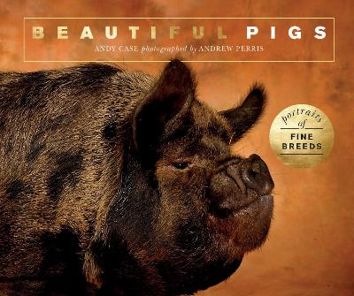 Beautiful Pigs: Portraits of champion breeds by Andy Case