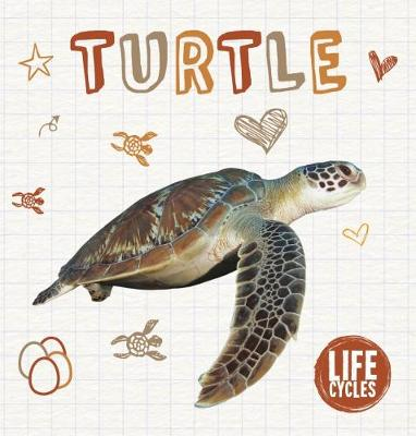 Turtle by Madeline Tyler