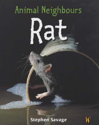 Animal Neighbours: Rat by Stephen Savage
