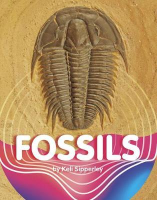 Fossils by Keli Sipperley