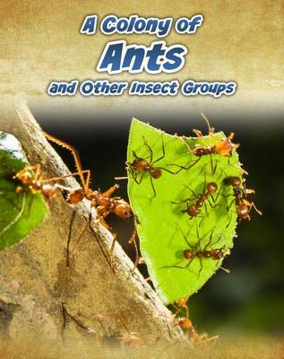 A Colony of Ants by Anna Claybourne