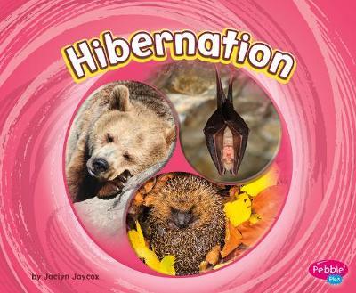 Hibernation by Jaclyn Jaycox