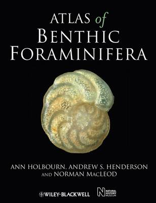 Atlas of Benthic Foraminifera by Ann Holbourn