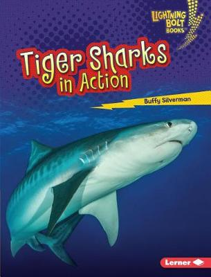 Tiger Sharks in Action by Buffy Silverman