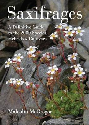 Saxifrages by Malcolm McGregor