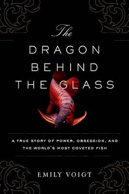 Dragon Behind the Glass by Emily Voigt