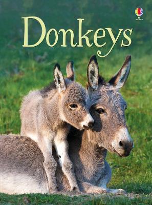 Beginners Donkeys by James Maclaine