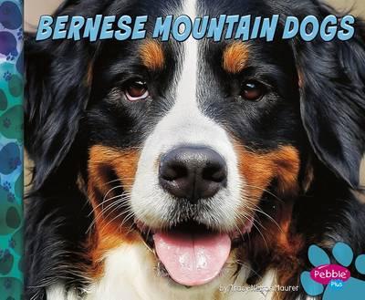 Bernese Mountain Dogs by Allan Morey