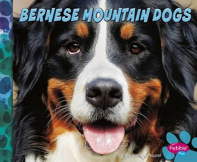 Bernese Mountain Dogs by Allan Morey