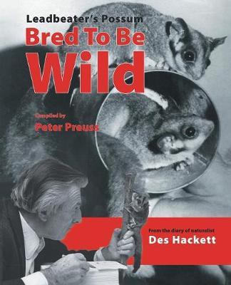 Leadbetter's Possum by Des Hackett