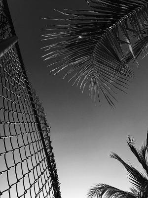Chris Ofili: Paradise Lost by Joshua Jelly-Schapiro