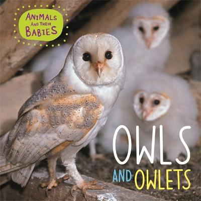 Animals and their Babies: Owls & Owlets by Annabelle Lynch
