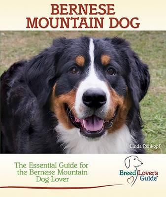 Bernese Mountain Dog by Linda Rehkopf