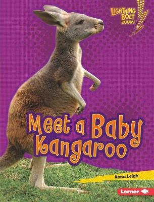 Meet a Baby Kangaroo by Anna Leigh